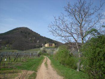Blättersberg and Villa Ludwigshöhe