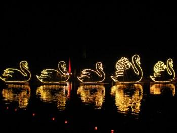 Swans lights