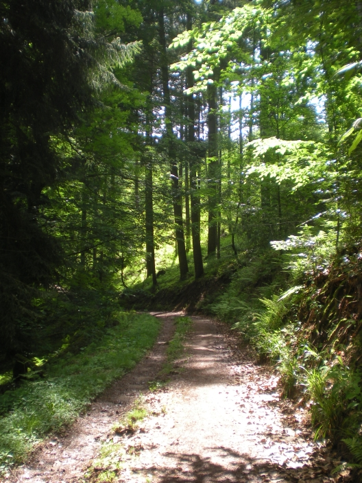 Hiking in the woods in Baden-Baden? Definitely a trip!