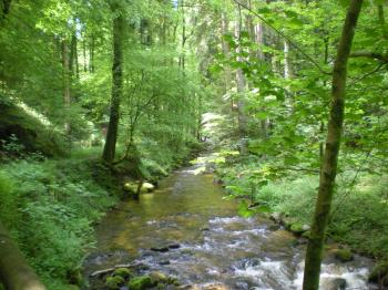 Down by the Grobbach stream