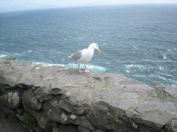 Our friend the seagull