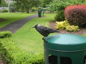 A bird on a bin!