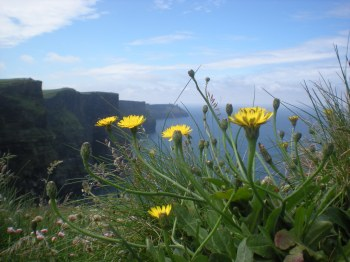 "Cliffs and dandelions... me trying to be ""artistic"""