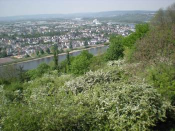 Koblenz from above