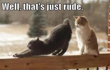 Picture: HumorFlip