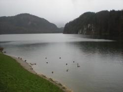 Ducks in the Alpsee