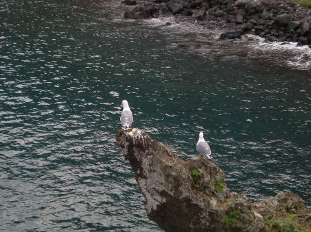Seagulls at Porto Moniz