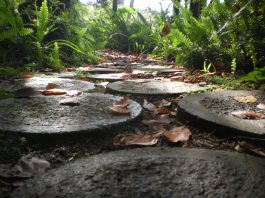 There were a few of these paths in the tropical gardens... I loved them!