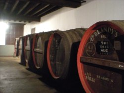 Madeira wine maturing in its casks