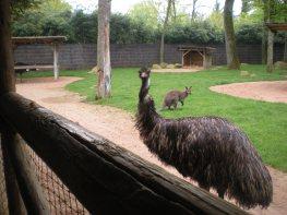 Amnéville zoo