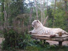 Amneville zoo