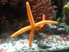 Is it just me, or is this starfish dancing?