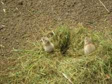 Baby mongoose!! Awwww.