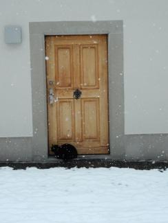 We found a kitty!