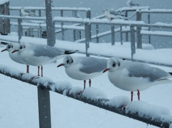 Pretty gulls all in a row