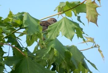 Peering bird
