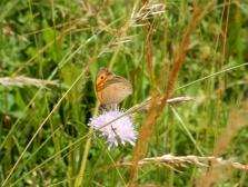 We saw lots of butterflies!