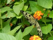 Kerzers Papiliorama