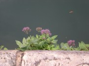 Flowers on the water's edge