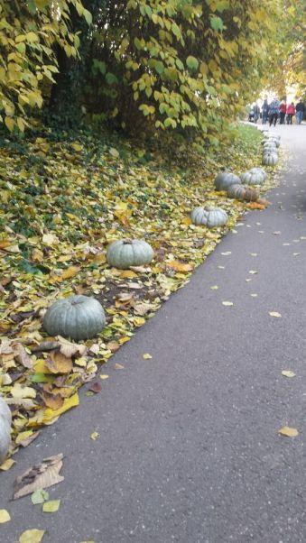 pumpkin path