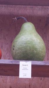 Pumpkin or pear?