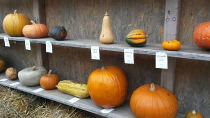 pumpkin shelf
