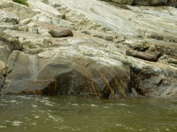 Seals, not on Seal Rock - how very dare they?