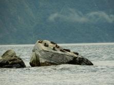 Seal Rock!