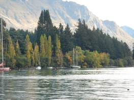 Autumn trees... behind them is part of Queenstown Gardens