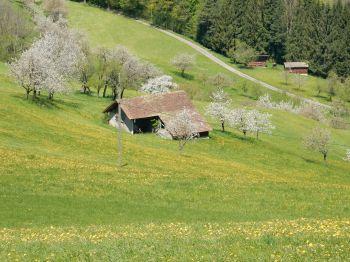 Sommerau-Läufelfingen hike