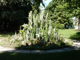 Cacti in the Schlosspark