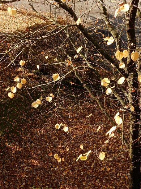 nearly-naked-tree