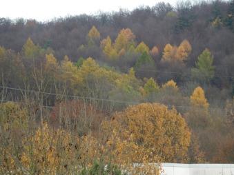 6_trees