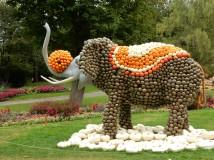 Pumpkin elephant