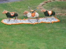 Pumpkin horses with rider