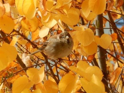 Hello birdie!