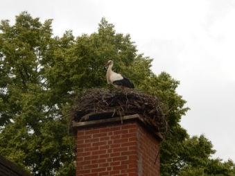 11-stork