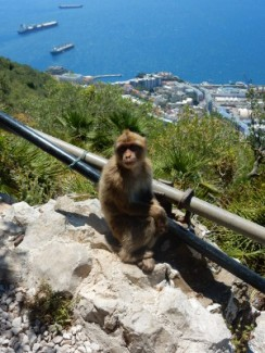 Monkey Mountain, Gibraltar