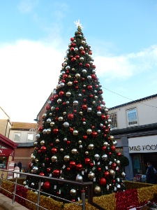 Morpeth Tree of Light